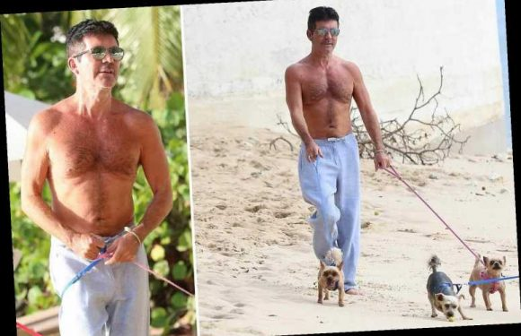 Simon Cowell shows off his slim figure as he walks his Chihuahuas topless on the beach in Barbados – The Sun