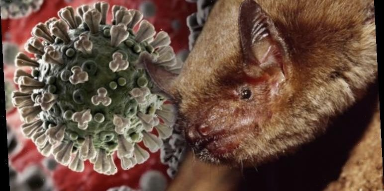 Coronavirus: How killer disease spread from bats to humans – and we are likely to blame