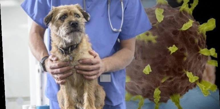 Coronavirus UK: Avoid 'petting and snuggling' with pets, vets warn as COVID-19 surges