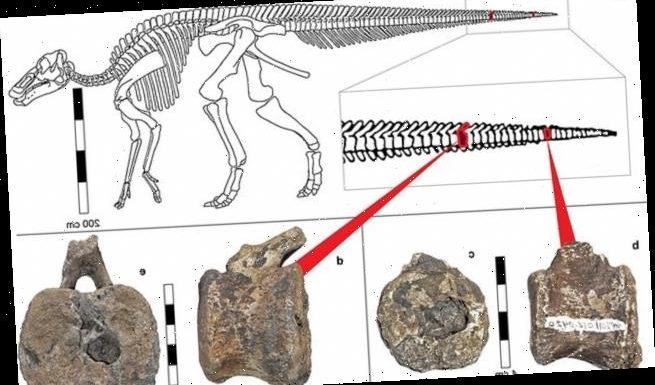 Tumours in dinosaur fossil shows it suffered from a painful cancer