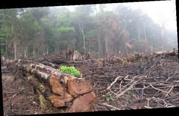 A fifth of the Amazon rainforest now emits more CO2 than it absorbs