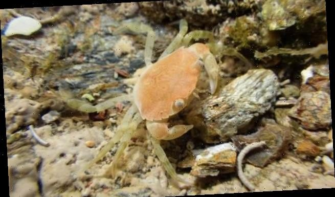 Ship noise makes crabs vulnerable to predators