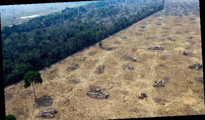 Deforestation rates in Amazon hit new high in first two months of 2020