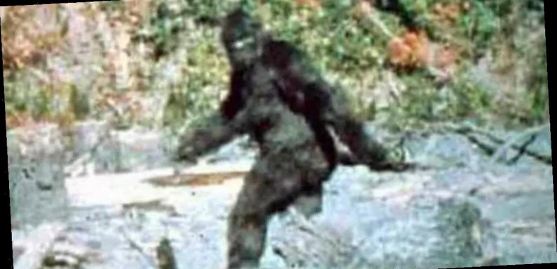 Bigfoot sceptic stunned after coming 'face to face' with the legendary monster