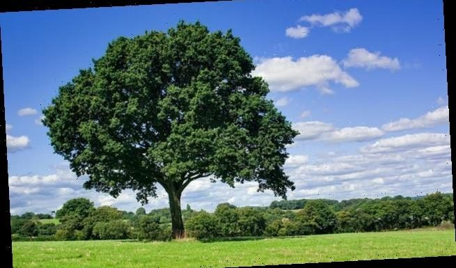 Trees are 'getting shorter due to climate change'
