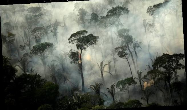 Number of fires in the Amazon reached a 13-year high in June
