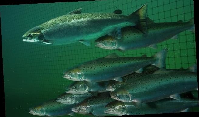 Rising water temperatures could endanger matings of many fish