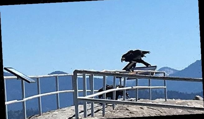 California park officials spot condors for the first time in 50 years