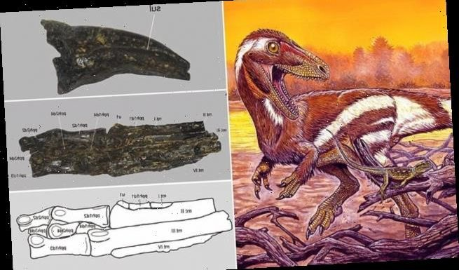 Foot of a three-toed dinosaur that lived in Brazil found