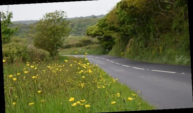 Verges become perfect home for bees in lockdown due to lack of cutting