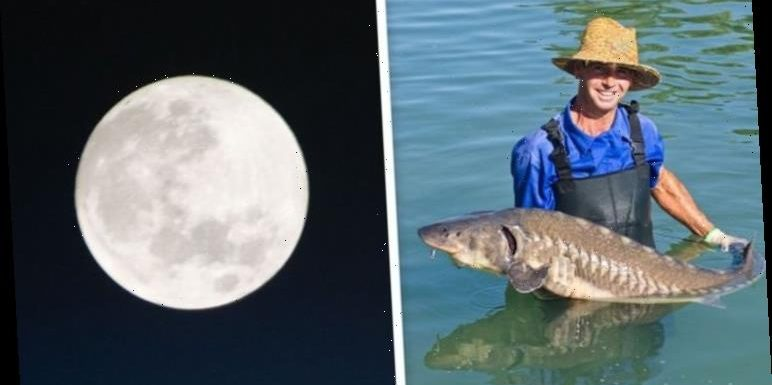 Full Moon 2020 meaning: Why is the August Full Moon called the Sturgeon Moon?