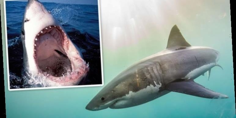 Shark breakthrough: 450 million-year-old great white mystery unravelled in Cape Cod probe