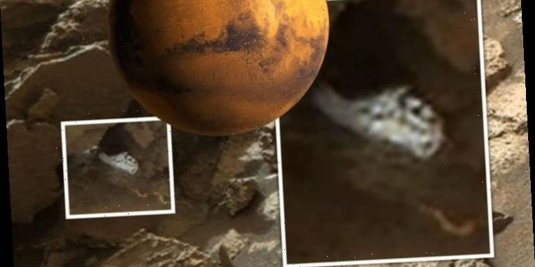 Aliens on Mars: UFO hunter finds 'FUNGUS' in NASA Curiosity Rover photo