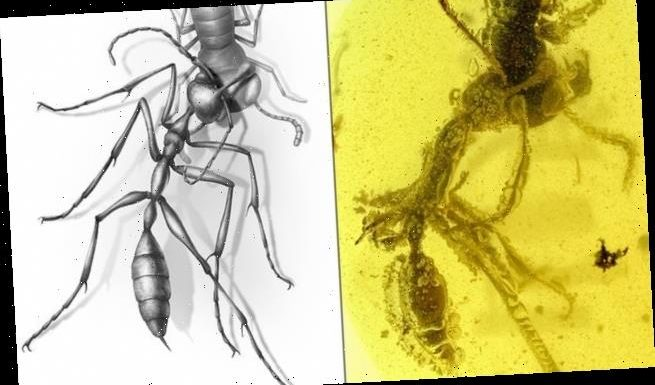 Ancient 'hell ants' had deadly mandibles that they used to pin prey