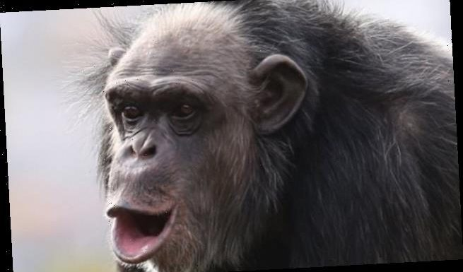 The larynx 'evolves faster in primates' than other mammals