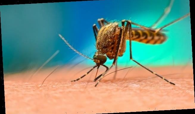 Malaria breakthrough could help speed up Covid-19 treatments