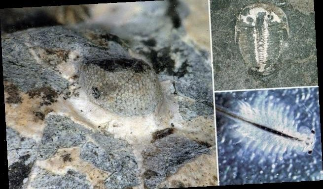 Compound eye of a 429-million-year-old sea creature is discovered