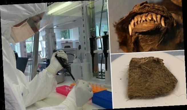 Woolly rhino remains found in belly of 14,000-year-old mummified puppy