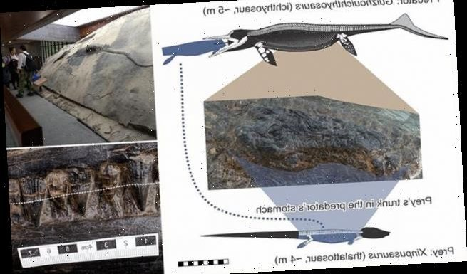 A 15-foot ichthyosaur died after eating a 12-foot long reptile
