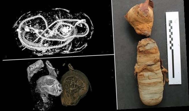 Ancient Egyptians killed snakes and cats to create mummified animals