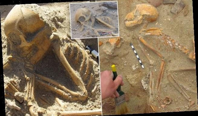 Monkey skeletons are discovered in 2,000-year-old animal cemetery