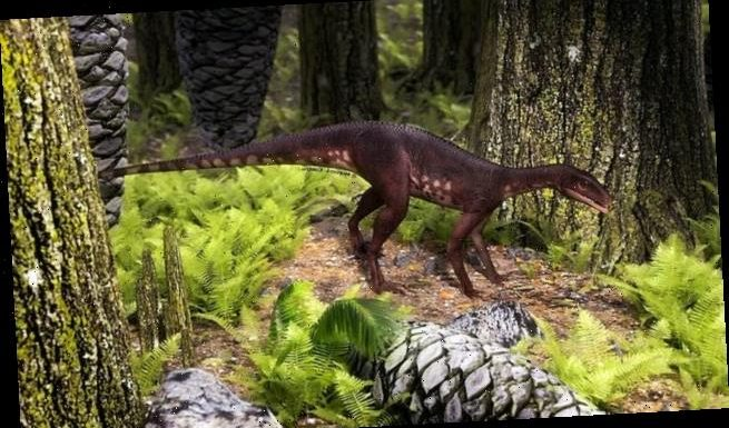 Dog-sized dinosaur may be the ghost ancestor of Triceratops