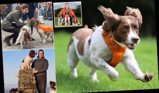 Spaniel Max could get a STATUE after raising £100k for animal charity