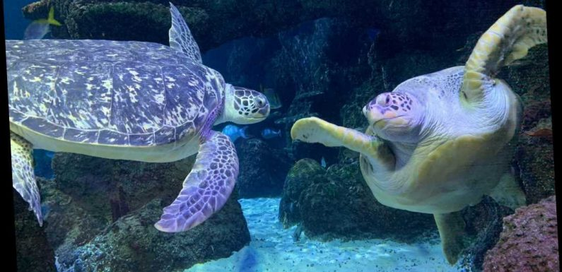 Turtles are receiving counselling after their lovestruck relationship hit the rocks