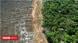 New UK law to curb deforestation in supply chains
