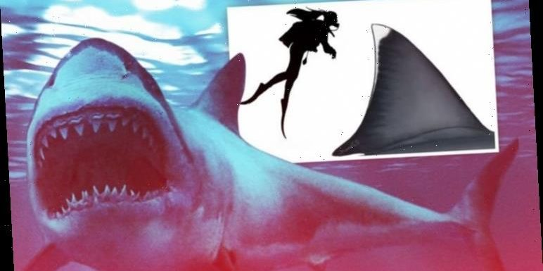 Terrifying scale of ancient Great White ancestor Megalodon EXPOSED – 'Larger and larger'