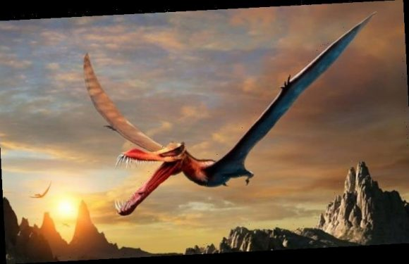 Flying reptiles: Claims 'flying dino' pterosaurs had feathers refuted in major challenge