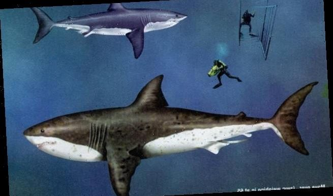 Total size of giant prehistoric mega-shark revealed