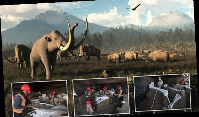 Mexico City site is 'mammoth central' after finding 130 more skeletons