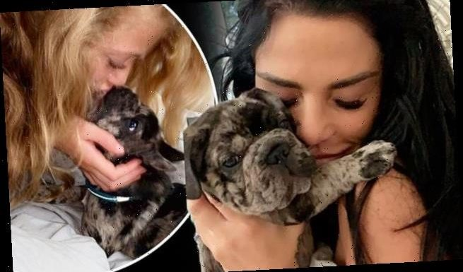Katie Price says dog breeders advised giving puppy Rolo cannabis oil