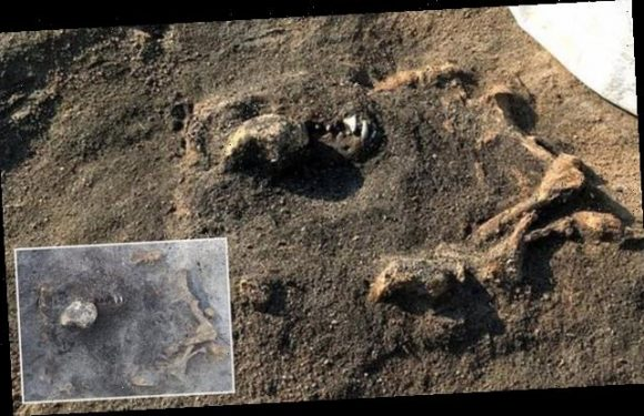 Dog remains more than 8,400 years old found at Stone Age burial site