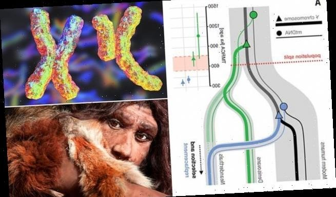 Neanderthal male sex chromosomes were replaced by modern human genes