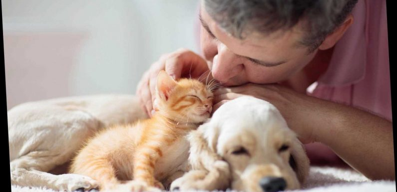 Isolate from your pets if you have coronavirus, experts warn