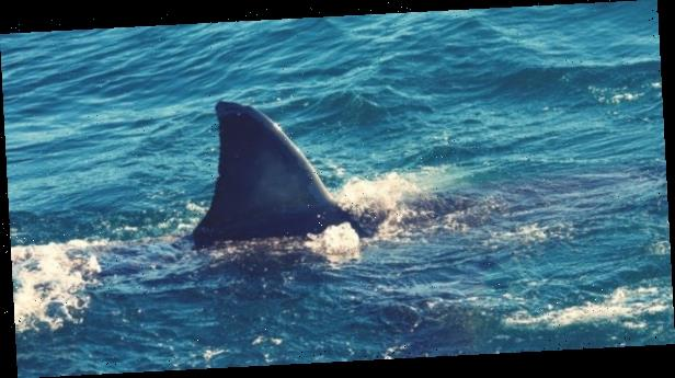 Pregnant woman pulls husband to safety after shark attack