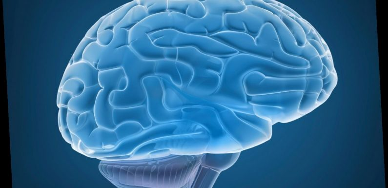 Is it a brain? Wisconsin man's beach find being examined: report