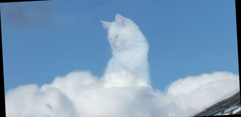 Cat owner's incredible optical illusion snap turns feline 'into a god'