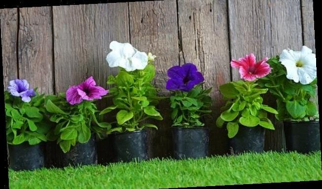 Adding ornamental plants to your front garden can help you be happier
