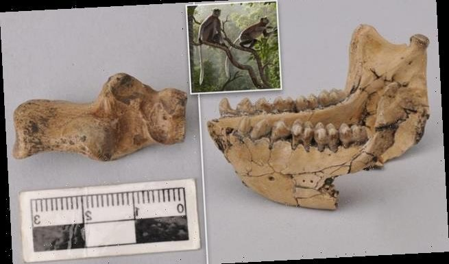 Monkey fossils unearthed in China date back 6.4 MILLION years