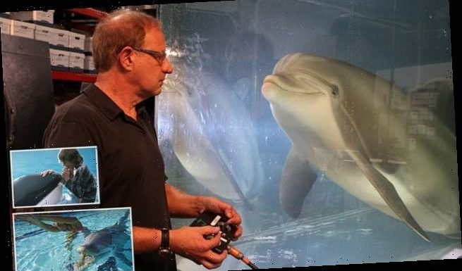 Life-like robotic dolphin could replace marine animals in captivity