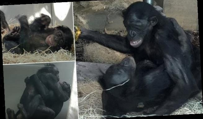 Bisexual female bonobos make eye contact during sex to form bonds