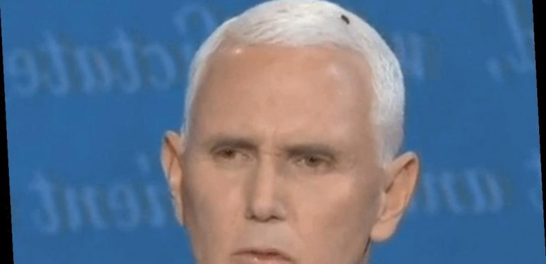 A Fly Sat on Pence's Head at the Debate & Celebs Reacted with Lots of Tweets!