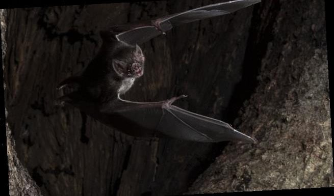 Vampire bats socially distance when they are sick