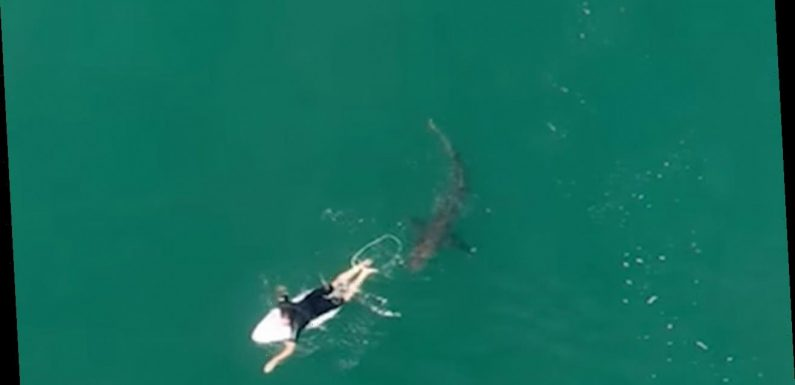 Pro-surfer in Australia has close call with 'dangerous shark,' closing beach