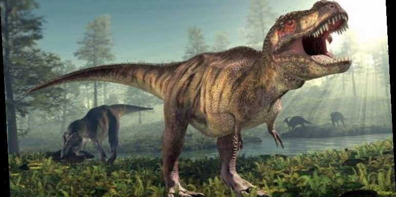 Dinosaur discovery: Teenage growth spurts saw mighty T-rex grow faster than its cousins