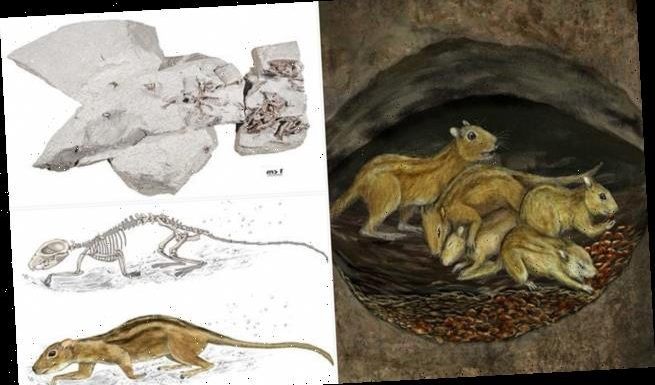 Fossilised burrow contains rodents snuggled-up together
