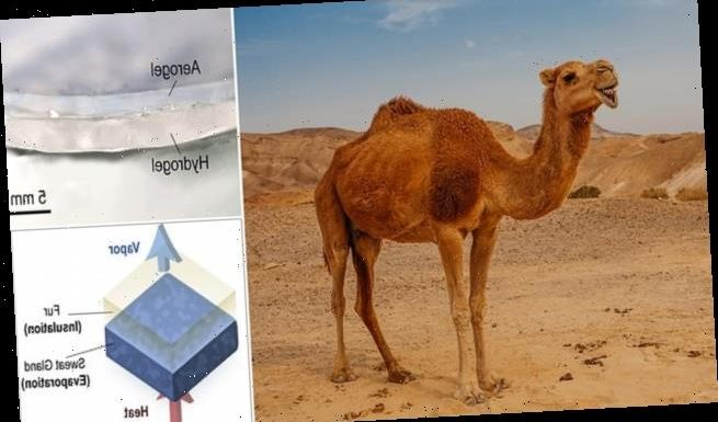 Camel-inspired material keeps products cool five times longer